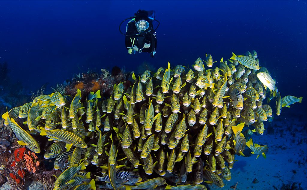Raja ampat diving is spectacular and truly unforgettable papua explorers - Raja ampat dive resort ...