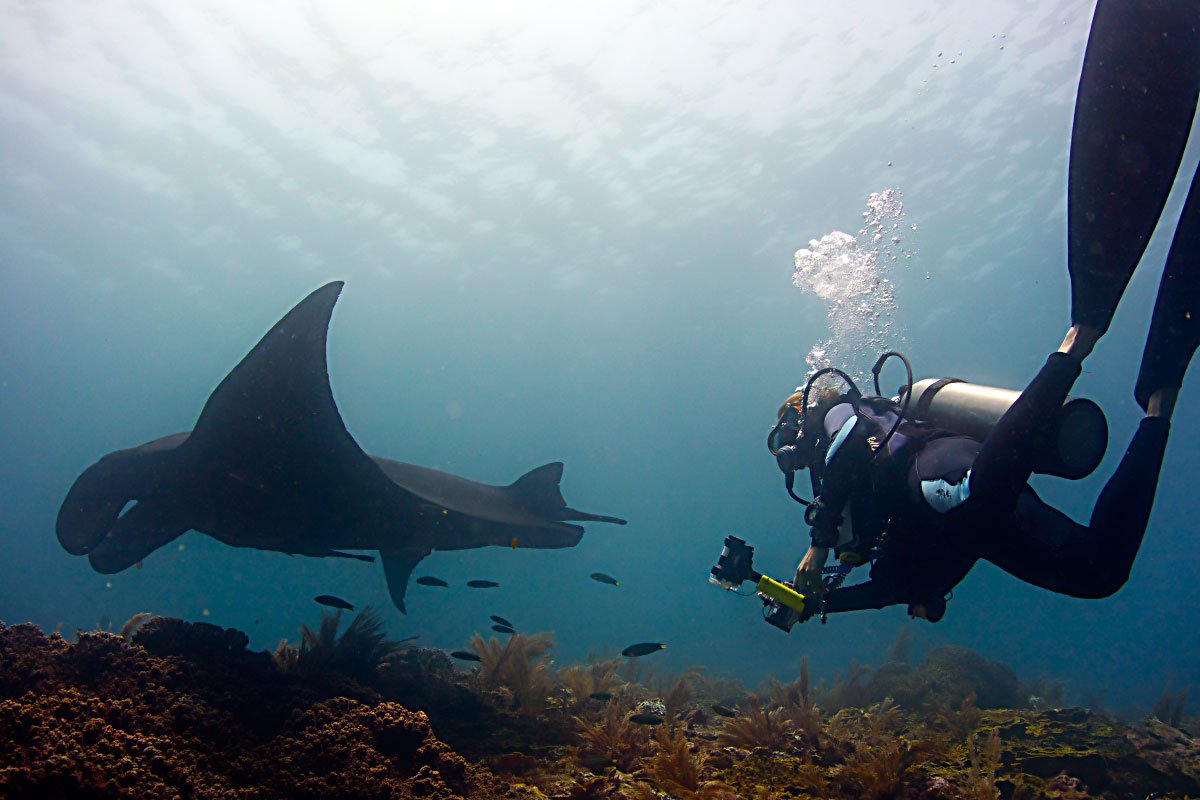 a scuba diver swimming under water behind a black manta ray in Raja Ampat