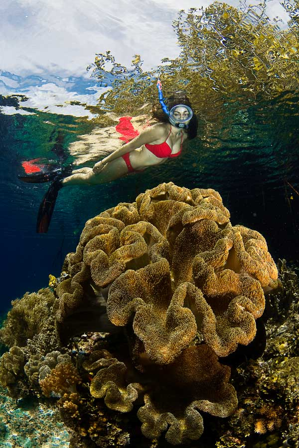 female snorkeler obersving a golden soft coral underwater in Raja Ampat