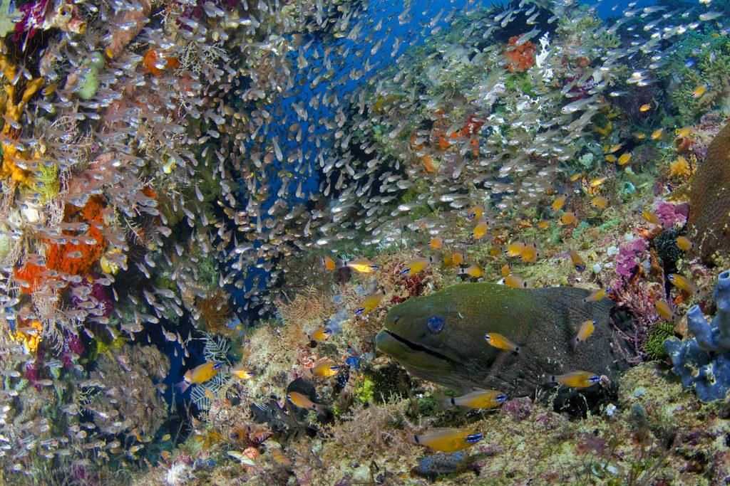 Scuba diving, Raja Ampat, snorkeling, diving