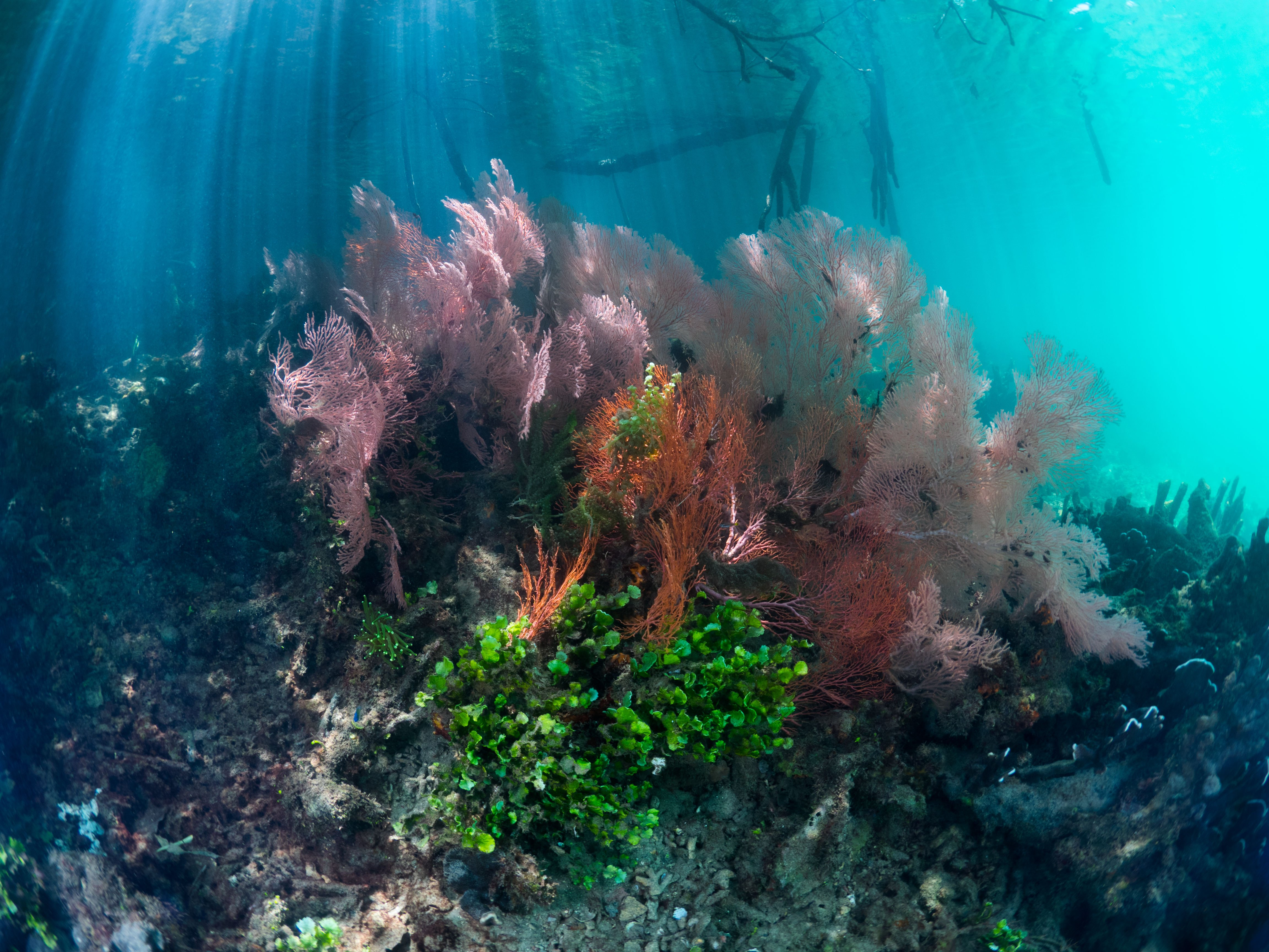 colorful soft corals at the passage in raja ampat