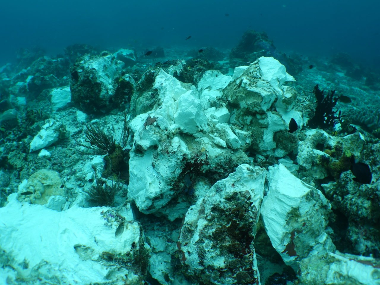 picture of reef top in Raja Ampat showing the harm done by British tourist ship Caledonian Sky