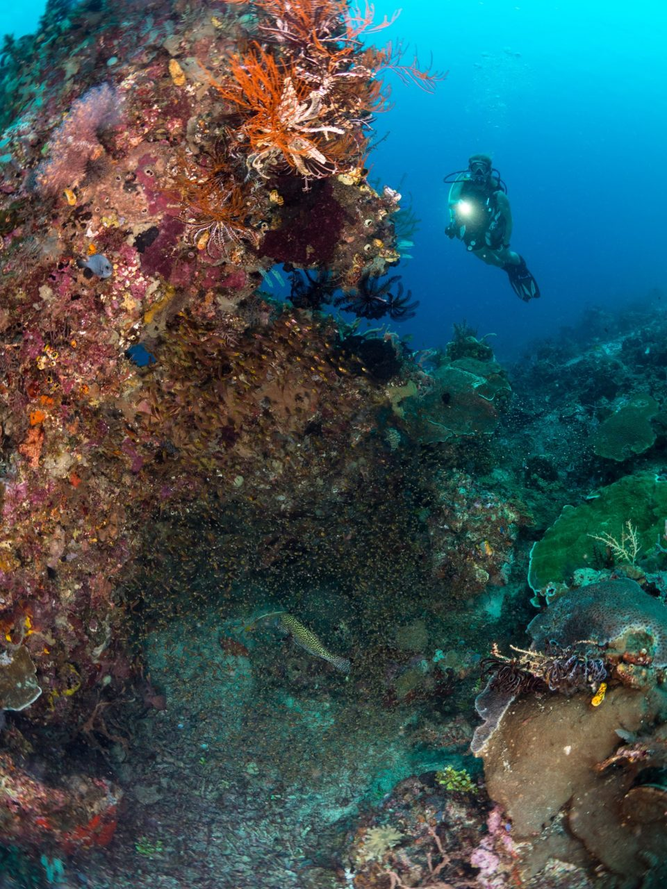 a diver watching glassfish buzzing around a coral head close to Papua Explorers Dive Resort