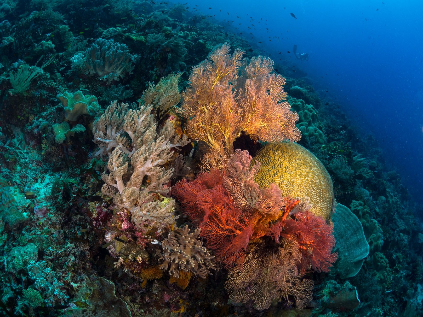 colorful hard and soft corals encountered while diving with Papua Explorers