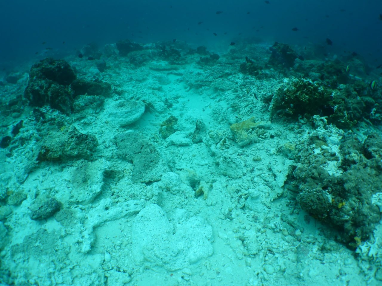 Image of Reef Damage at Raja Ampat Crossover Reef