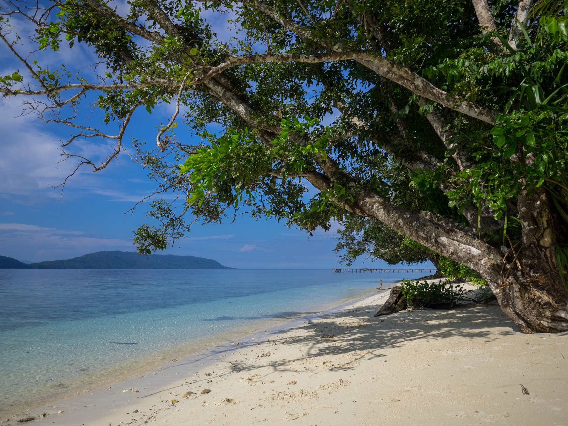 White Sand Beach With Trees Leaning Over It And Ocean Islands In The Background Close