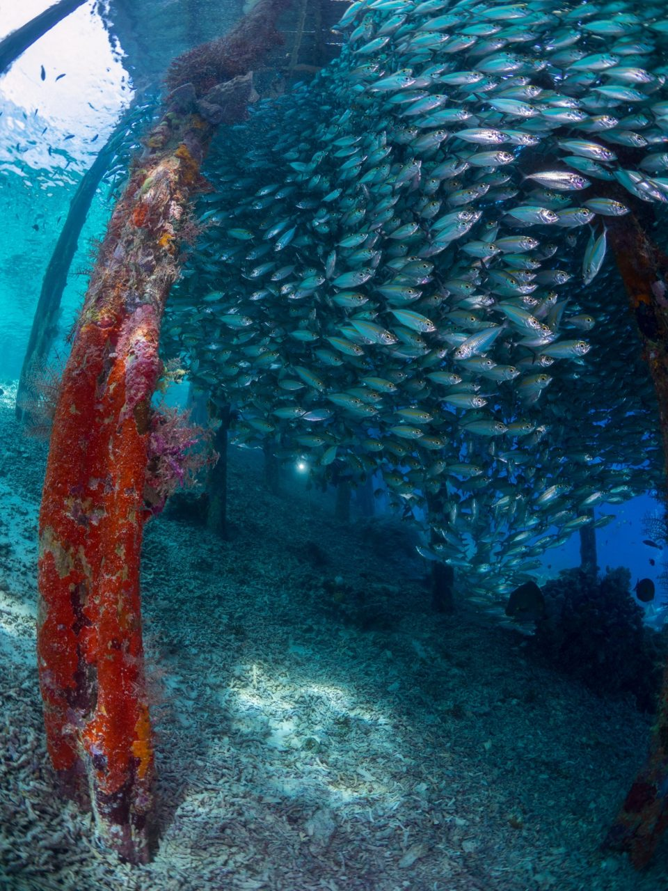 huge school of fish under Arborek jetty while diving with Papua Explorers
