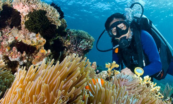 scuba diver observing soft corals underwater