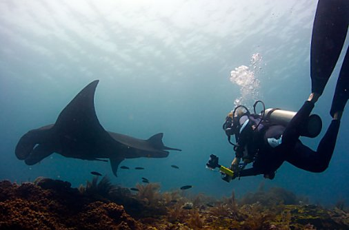 raja-ampat-diving-manta-conservation