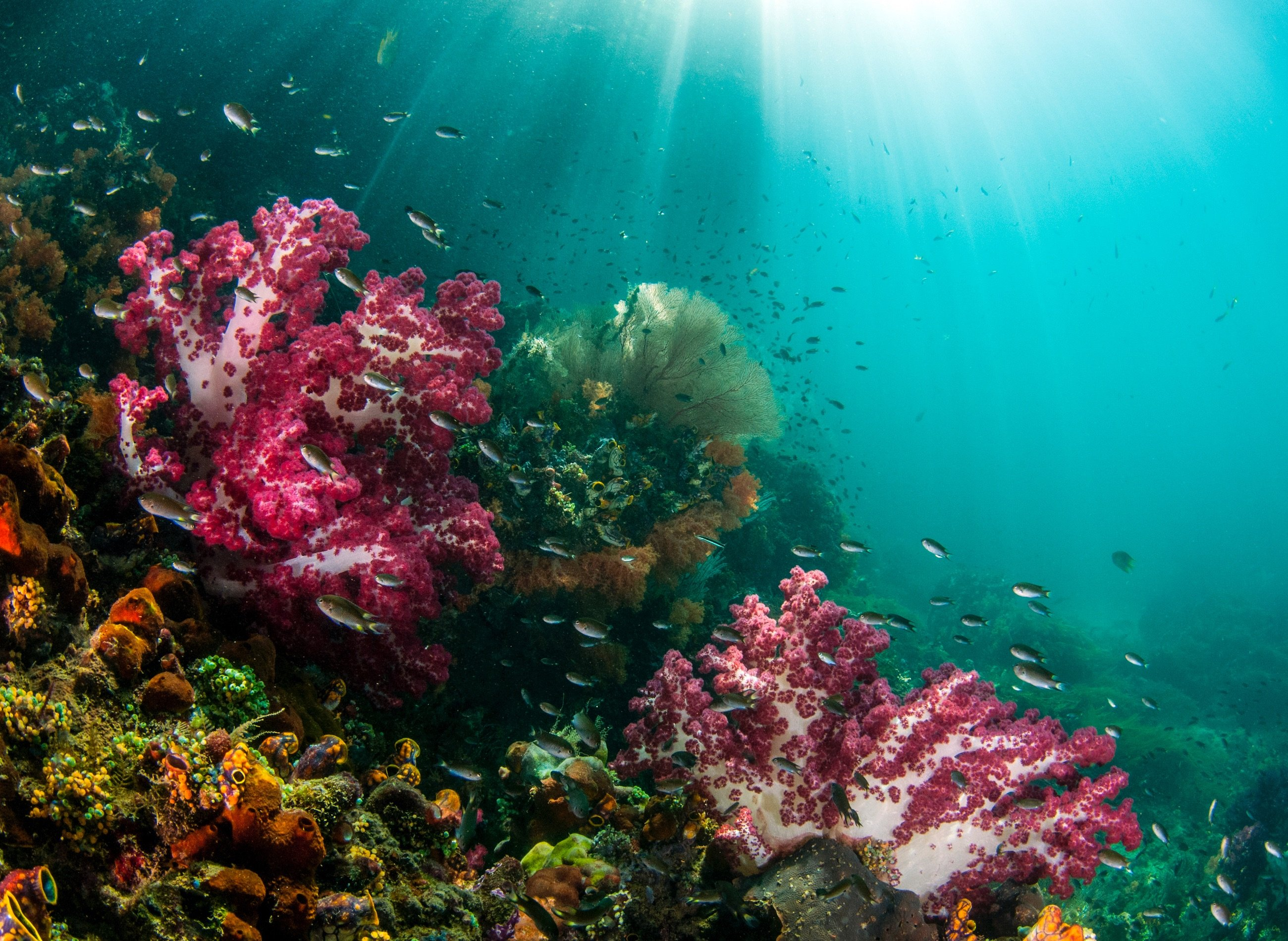 75% of the world's coral species can be seen Raja Ampat
