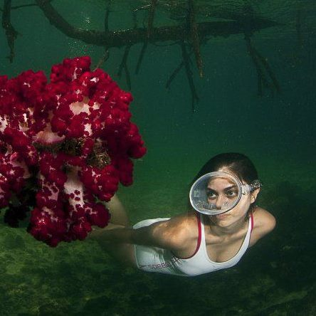woman snorkeling in Raja Ampat watching a dark red softcoral