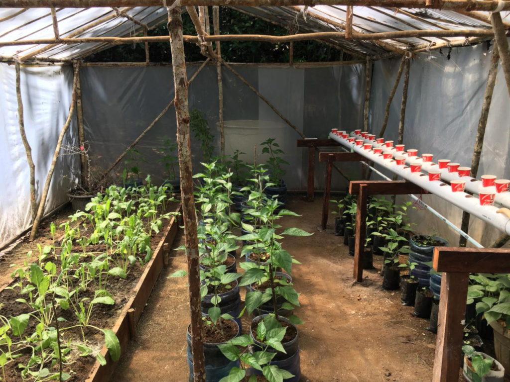 plant nursery at Papua Explorers, a project that we establishd during COVID-19 lockdown in Raja Ampat