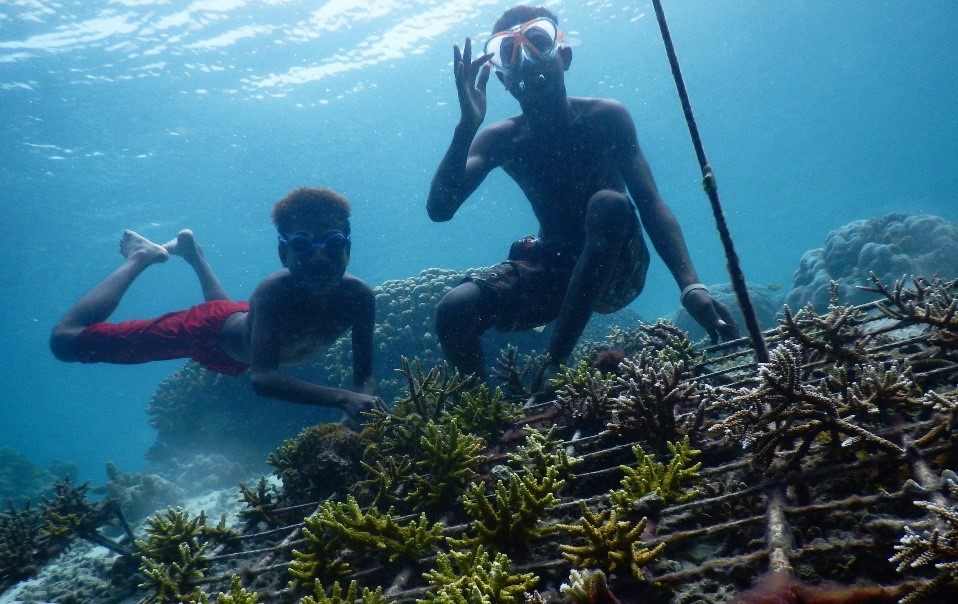 papuan locals snorkeling at a coral reef planting structure in Raja Ampat