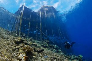 scuba diver underwater underneath a jetty surrounded by fish