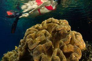 female snorkeler obersving a golden soft coral underwater in Raja Ampat