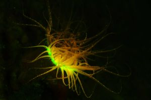 underwater creature spotted while diving in Raja Ampat with flourescent light