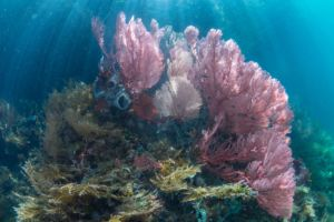 soft corals in the shallows of the passage in raja ampat