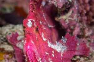 Fish Portrait on a reef close to Papua Explorers Dive Resort