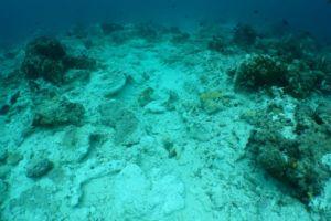 Image of Reef Damage at Raja Ampat Crossover Reef