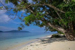 white sand beach with trees leaning over it and ocean and islands in the background close to Papua Explorers Dive Resort