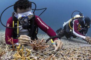 Reef Gardener Project